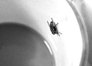 coffee-cup-fly