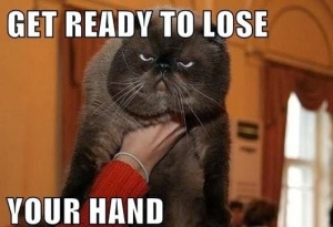 funny-grumpy-angry-cat-ready-to-lose-hand-pics